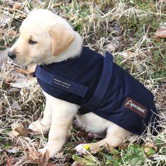 Wool Dog Coat
