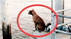 Dog Fell Off A Boat Waited In This Spot 4 Months For Her Family To Return !
