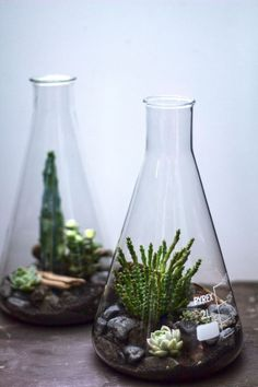 Test tube plant pots! #cool #LoveNature: