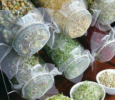 Try growing your own sprouts.  All you need are some seeds, a large, clean jar and some netted fabric secured with a band. Soak seeds that have been thoroughly rinsed for the first 24 hours in clean cool  water, draining and refreshing the water several times. Store in the dark. Then rinse twice a day with fresh clean water and set in sunlight Your sprouts will be ready to eat in a week..