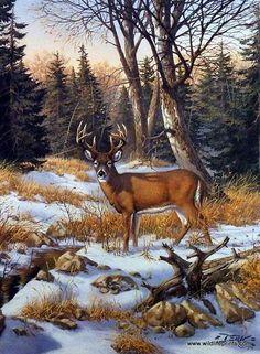 Derk Hansen On The Edge Of The Woods