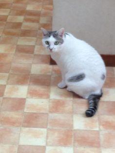 飼い猫@世田谷 /House cat @Tokyo.Setagaya