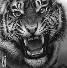 great Tiger by on DeviantArt - Tattoo Vorlagen Zeichnung Angry Tiger, Big Tiger, Tiger Art, Tiger Head Tattoo, Lion Head Tattoos, Tiger Sketch, Tiger Drawing, Majestic Animals, Animals Beautiful