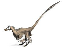 Velociraptor - from the Late Cretaceous - Wikipedia, the free encyclopedia