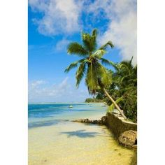 Clear Waters on Mahe Island Seychelles Africa Canvas Art - Alison Wright DanitaDelimont (11 x 17)