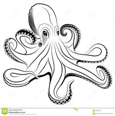 royalty free octopus | Royalty Free Stock Photography: Octopus
