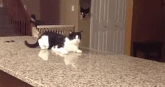 Derp Cat | 32 GIFs Guaranteed To Make You Laugh Every Time