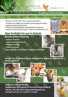 Aloe Vera Gelly is a clear, odorless topical gelly used as an effective treatment for numerous external disorders in animals. Historically, in areas where Aloe Barbedensis grew, farmers would cut off a piece and wrap it around an animals wound to speed healing. Externally applied aloe vera gel is ideal for the care of cat fur, dog skin, horses and other domestic pets.
