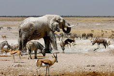 Watching the animals at the waterhole just minutes from my tent in Etosha, Namibia - captivating!!