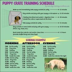 Free printable puppy crate training schedule! The best solution to potty train your dog and prevent home destruction. Follow this positive and effective method and your canine will love its new den. #puppypottytrainingschedule #puppytrainingcrate