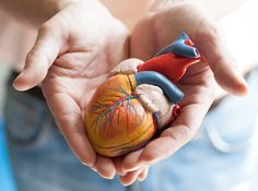 New organ transplant letter reinforces that all lives are worthy