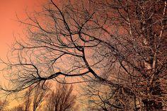 Baum, Baum Oben, Winter Baum, Zweig, Kahlen Ast