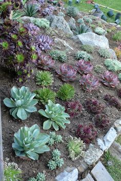 Succulent Garden Design Impressive  With Images Of Succulent Garden Ideas New On Gallery