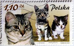Poland. MAMMALS & THEIR YOUNG. CAT. (Brown denomination) Scott 3628b A1230, Issued 2002 Mar 25, Perf. 11 3/4 x 11 1/2 Sync., 1.10. /ldb.
