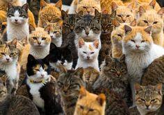 Auf der Insel Aoshima in Japan leben sechsmal so viele Katzen wie Menschen....