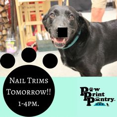 Nail Trims tomorrow! 1-4pm #PawPrintPantry #NianticCT #EastLymeCT #PetCare