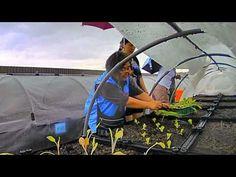 開心菜園開心上路-社區屋頂菜園園啟用活動暨農業技術課程縮時攝影記錄