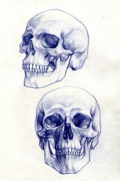 Anatomía craneal (Dibujo).
