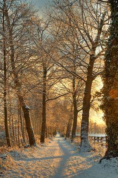 Golden winter path