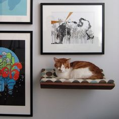 wall mounted pet beds | Wall-Mounted Pet Beds Are Perfect For Small Spaces