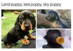 """Cute baby animals - miracufic """" neverparted """" """" but everything changed when the fire puppy attacked """" Cute Animal Memes, Animal Jokes, Cute Funny Animals, Funny Animal Pictures, Funny Cute, Funny Dogs, Funny Memes, Funny Videos, Cute Puppies"""