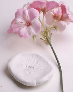 Activities: Create a Clay Flower Press