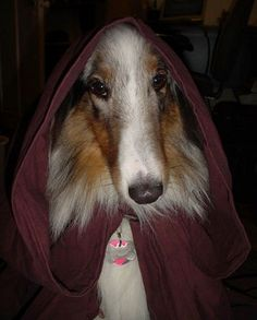 These 28 Star Wars Dogs Are Everything You Never Knew You Needed