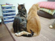 Кавайняшка: Фотографии кошек