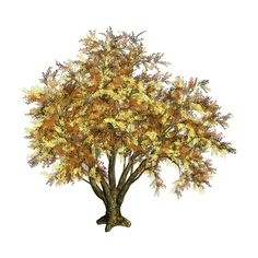 R11 Tree and Flower 0231.png ❤ liked on Polyvore featuring trees, flowers, fall, autumn and fall trees