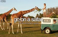 Before I die…OMG OMG OMG YES YES AGAIN IT'S HAPPENING GIRAFFES OMGEEEEE THEY ARE LOVELY sorry lost my control