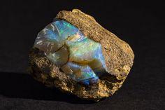 Opal at South Australian Museum