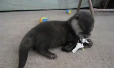 The Baby Otter Who Isn't Sure About Keys | The 40 Cutest GIFs In The History Of TheInternet