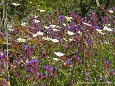 Цветы на острове Враньина на Скадарском озере Plants, Plant, Planets