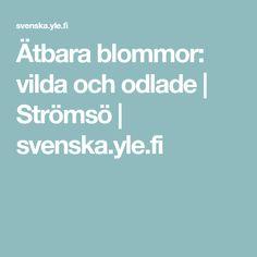 Ätbara blommor: vilda och odlade | Strömsö | svenska.yle.fi