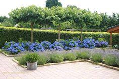 Afbeeldingsresultaat voor wintergroene tuin