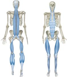 208 best All About Fascia - What is Fascia? images on Pinterest in ...