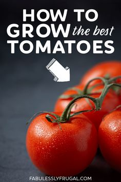 Now that I am a tomato growing expert Im going to share some tips that Ive learned along the way. Hopefully these tips help you grow the best tomatoes ever! Gardening For Beginners, Gardening Tips, Outdoor Pallet Projects, Tomato Seedlings, Vegetable Garden Tips, Mini Greenhouse, I Work Hard, Growing Tomatoes, Diy Planters