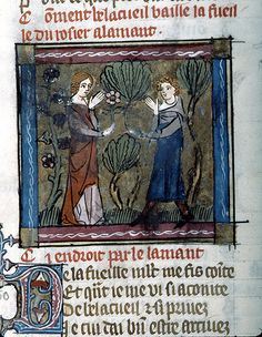 - Welcome presenting Rose Branch to Lover; Francie ca The Morgan Library & Museum Morgan Library, Medieval Manuscript, 14th Century, Rose, Renaissance, Museum, Painting, Image, Murals
