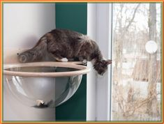 (paid link) This is not just a hammock, it's a summative bunk bed taking into account hammocks, ideal for two cats! (Or you may just create it larger for three kitties). gone clean ... #cathammock Cat Climbing Shelves, Cat Climbing Wall, Modern Cat Furniture, Pet Furniture, Furniture Design, Wooden Wall Shelves, Cat Shelves, Bubble Cat, Wooden Cat House