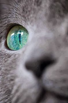 5 cats with amazing eyes, I loved this one :)