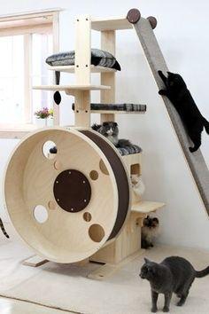 Ваша кошка будет любить это 2