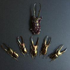 crystallized Cyclomattus metallifer beetle
