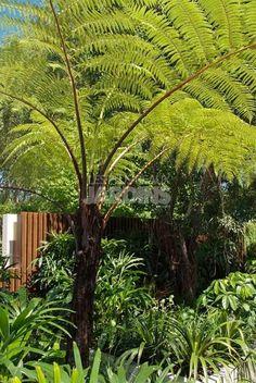 Un paradis tropical végétal autour d'un bassin   LES PLUS BEAUX JARDINS