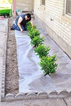 An affordable and easy DIY landscaping tutorial for adding japanese boxwoods or plants to the front of your home to boost curb appeal. #LandscapingTips&Tricks
