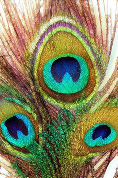 Funky Peacock Feathers Art Print by Joke Vermeer   Society6