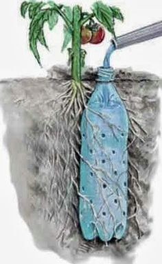 Bottle Drip Feeder for Plants - Water Plants with a Soda Bottle Underground Self Watering Recycled Bottle System - Potted Vegetable Garden Lif.Underground Self Watering Recycled Bottle System - Potted Vegetable Garden Lif. Diy Garden, Dream Garden, Lawn And Garden, Garden Projects, Garden Landscaping, Garden Plants, Potted Plants, Landscaping Ideas, Recycled Garden