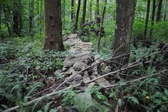 A second rock wall once a border in Sadsbury Woods Preserve