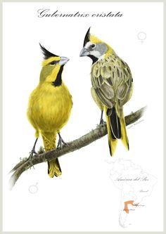 Ilustraciones- Ilustraciones Científicas                              …