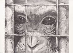 """""""Koko"""" 