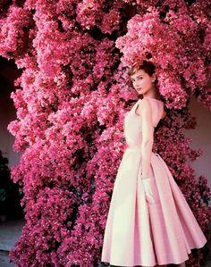 Audrey Hepburn and bougainvillea, Italy, 1955 by Norman Parkinson